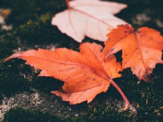 leaves 1030816 960 720 e1466957447192 - La mediación como cambio cultural